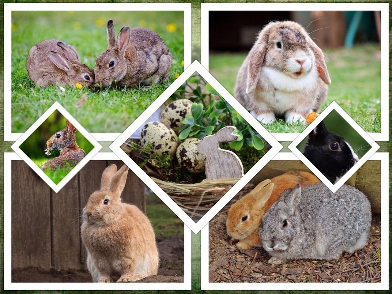 Hasencollage, Kaninchenkäfig kaufen